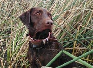 Sadie Rose Da Serra watching ducks while hunting